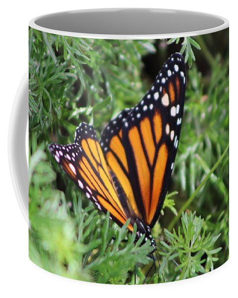 Monarch Butterfly Coffee Mug featuring the photograph Monarch Butterfly In Lush Leaves by Colleen Cornelius