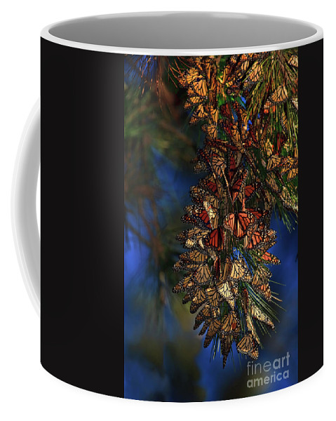 Monarch Cluster Coffee Mug featuring the photograph Monarch Cluster by Beth Sargent