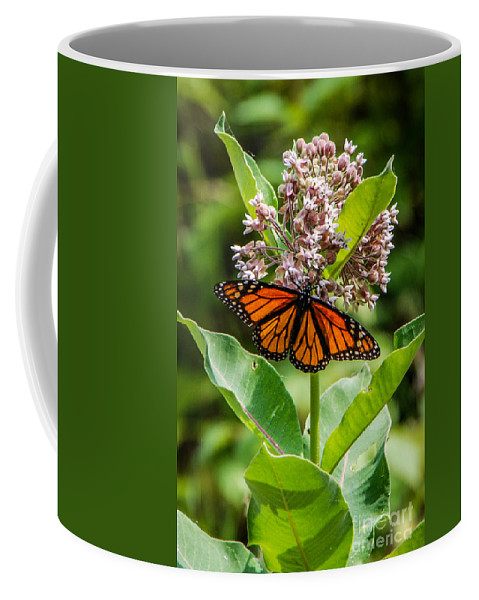 Monarch Coffee Mug featuring the photograph Monarch On Milk Weed by Grace Grogan