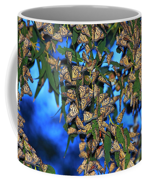 Monarch Cluster Coffee Mug featuring the photograph Monarchs by Beth Sargent