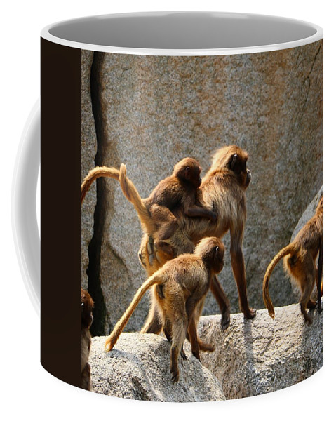Animal Coffee Mug featuring the photograph Monkey Family by Dennis Maier