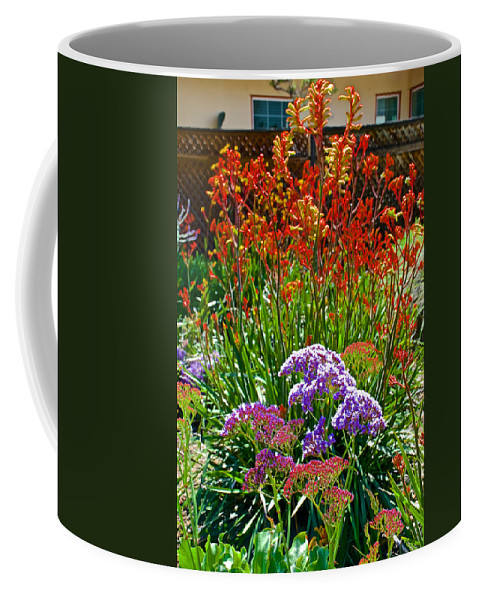 Yellow-orange Kangaroo Paws And Sea Lavender In Front Of Napier Common Room At Pilgrim Place In Claremont Coffee Mug featuring the photograph Yellow-orange Kangaroo Paws And Sea Lavender By Napier At Pilgrim Place In Claremont-california by Ruth Hager