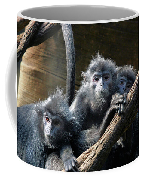 Monkey Coffee Mug featuring the photograph Monkey Trio by Karol Livote