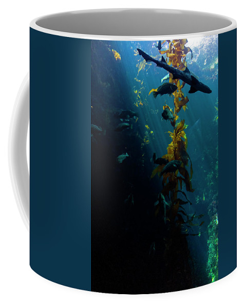 Monterey Coffee Mug featuring the photograph Monterey Depths II by Greg Reed