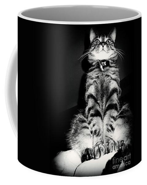 Cat Coffee Mug featuring the photograph Monty Our Precious Cat by Jolanta Anna Karolska