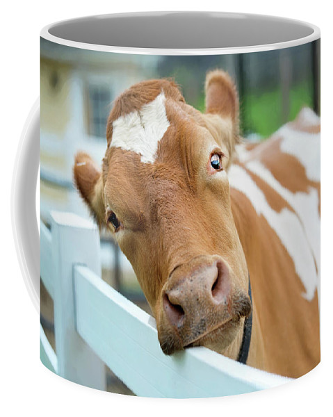 Animals Coffee Mug featuring the photograph Moo by Sue Collura