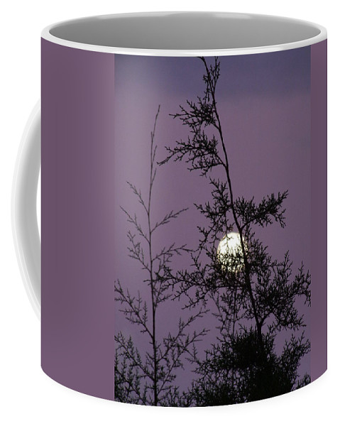 Mary Deal Coffee Mug featuring the photograph Moon Trees by Mary Deal