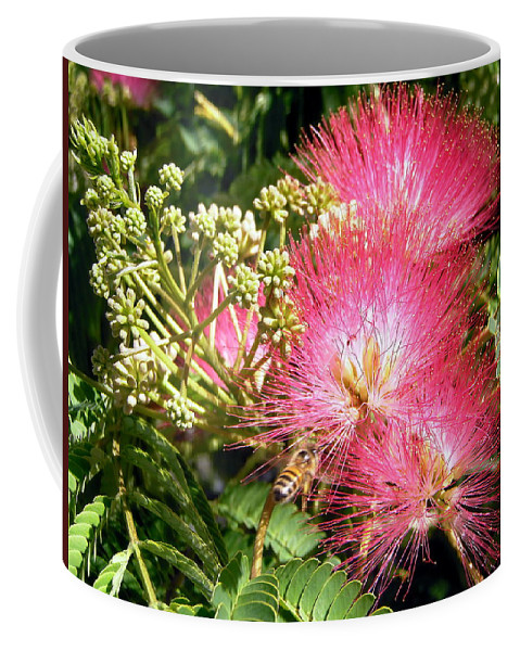 Flowers Coffee Mug featuring the photograph More Mimosa by Stephanie Moore