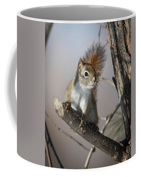 Red Squirrel Coffee Mug featuring the photograph More Seeds Please by Rhoda Gerig