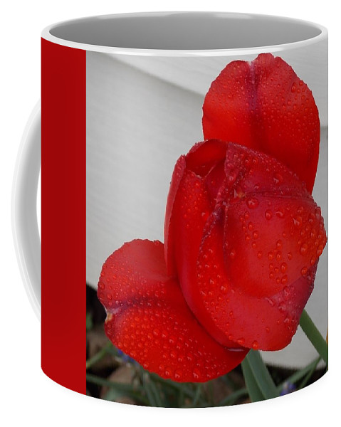 Flowers Coffee Mug featuring the photograph Morning Dew by Coleen Harty