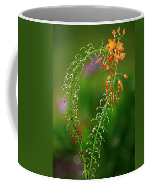 Flowers Coffee Mug featuring the photograph Morning Dew On Orange Flowers by Carol Groenen