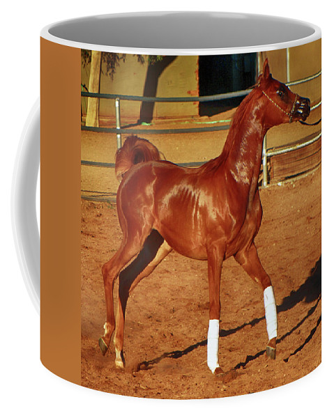 Horse Coffee Mug featuring the photograph Morning Exercise by C H Apperson