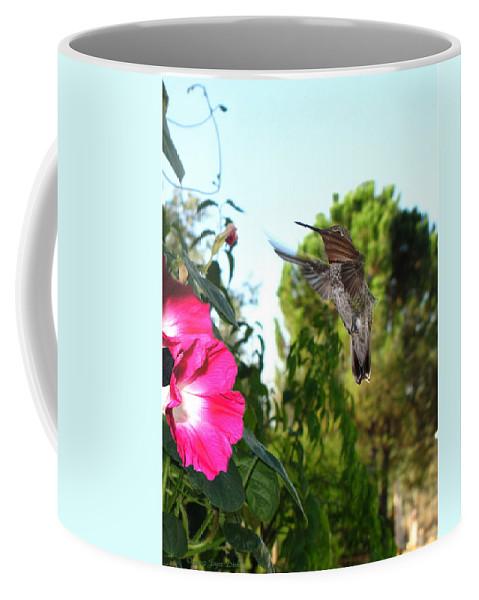 Bird Coffee Mug featuring the photograph Morning Glories And Humming Bird by Joyce Dickens
