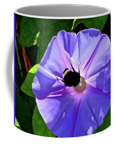 Flower Coffee Mug featuring the photograph Morning Glory by Diana Hatcher