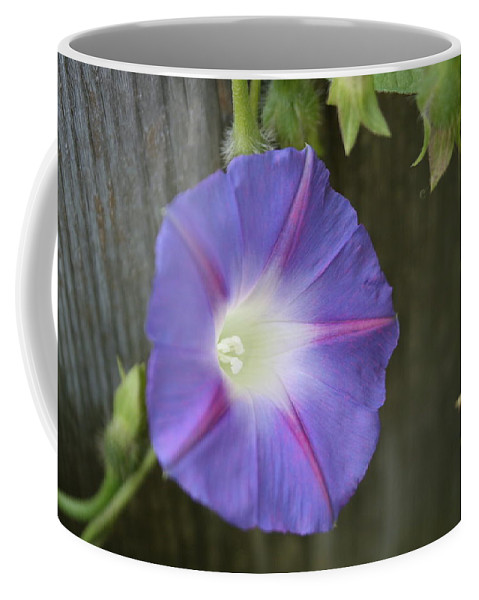 Morning Glory Coffee Mug featuring the photograph Morning Glory On Fence by Julie Kindt