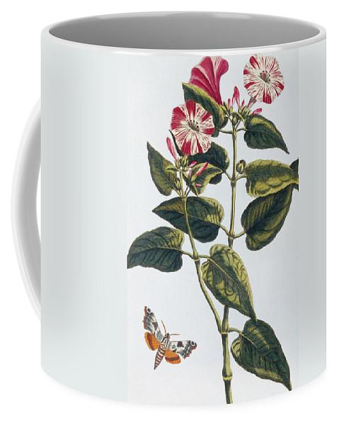 Morning Glory Coffee Mug featuring the painting Morning Glory by Pierre-Joseph Buchoz
