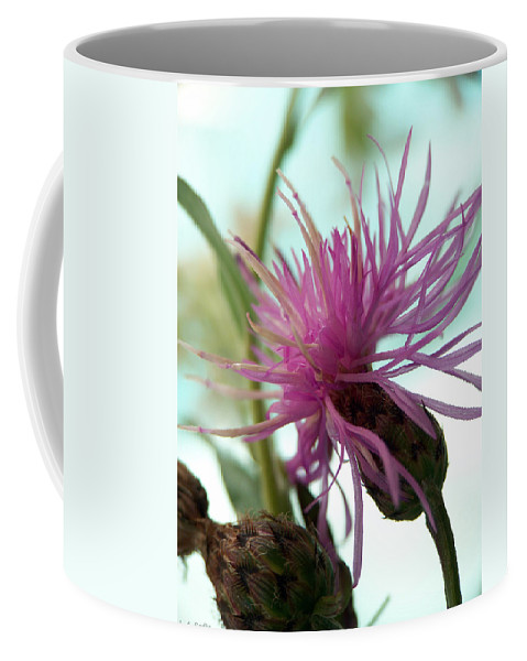 Lauren Radke Coffee Mug featuring the photograph Morning Light by Lauren Radke