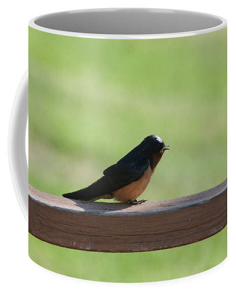 Barn Swallow Nesting Bird Singing Nature Wild Coffee Mug featuring the photograph Morning Song by Andrea Lawrence