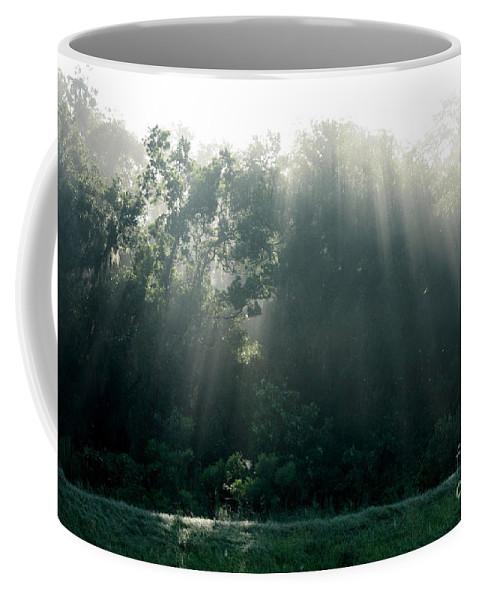 Light Coffee Mug featuring the photograph Morning Sunshine by Carol Groenen
