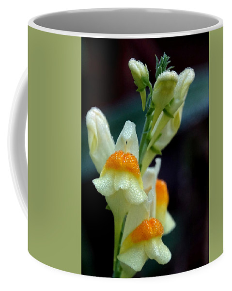 Dew Coffee Mug featuring the photograph Mornings Natural Bling by Lori Pessin Lafargue