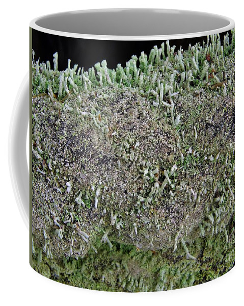 Moss Coffee Mug featuring the photograph Moss Trees by D Hackett