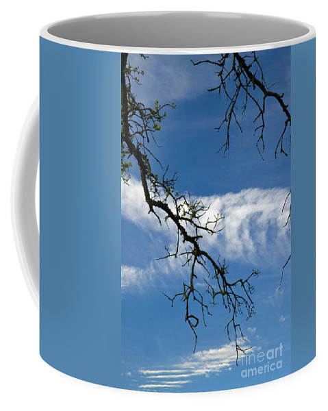 California Scenes Coffee Mug featuring the photograph Mossy Branches Skyscape by Norman Andrus
