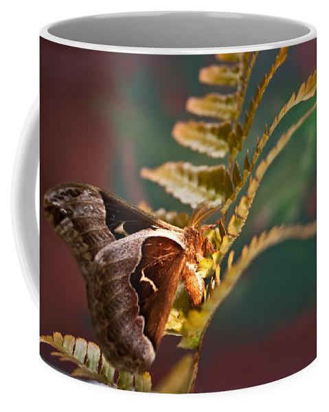 Moth Coffee Mug featuring the photograph Moth At Sunrise by Douglas Barnett
