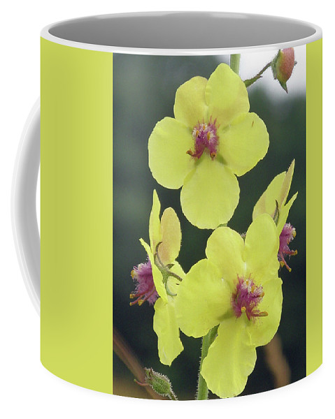 Wildflower Coffee Mug featuring the photograph Moth Mullein Wildflowers - Verbascum Blattaria by Mother Nature