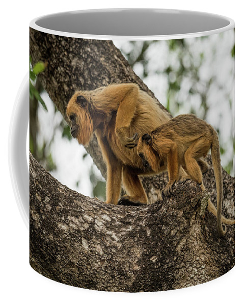 Alouatta Caraya Coffee Mug featuring the photograph Mother And Baby Black Howler Monkeys Climbing by Ndp