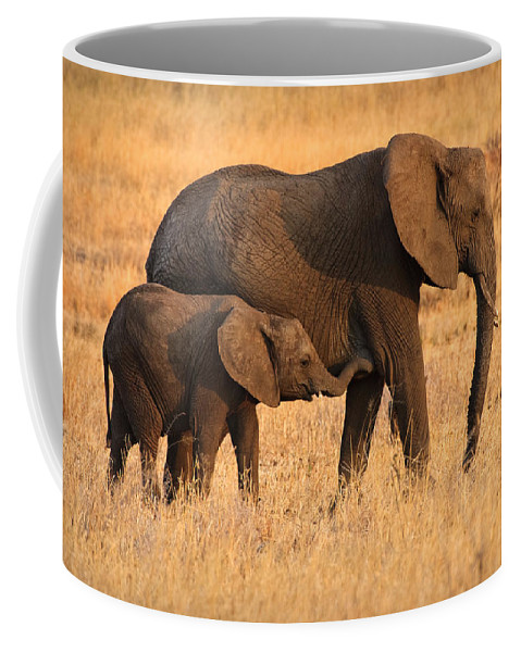 3scape Photos Coffee Mug featuring the photograph Mother And Baby Elephants by Adam Romanowicz