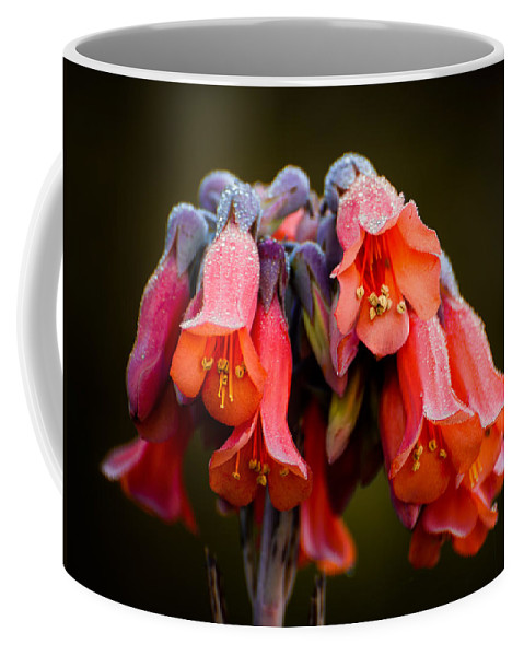 Succulent Plant Coffee Mug featuring the photograph Mother Of Thousands by Zina Stromberg
