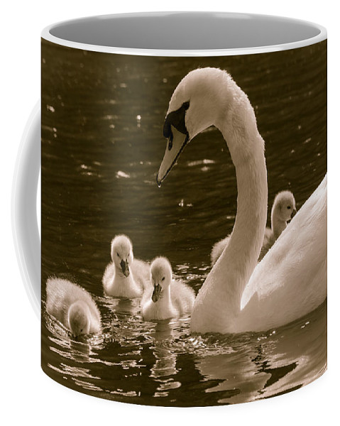 Babies Coffee Mug featuring the photograph Mother Swan by F Helm