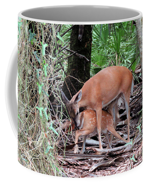Doe Coffee Mug featuring the photograph Mother's Care by Rosalie Scanlon