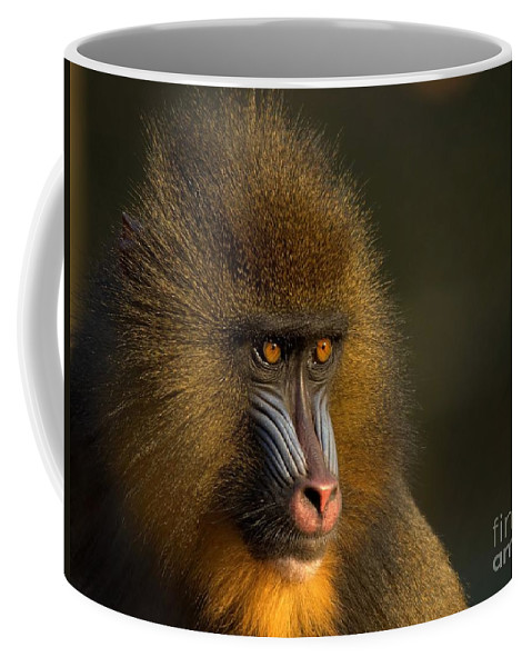 Wildlife Coffee Mug featuring the photograph Mother's Finest by Jacky Gerritsen
