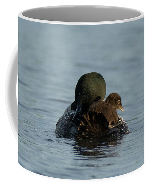 Loon Coffee Mug featuring the photograph Mother's Love by Jan Mulherin