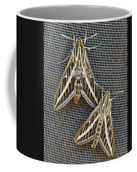 Moths Coffee Mug featuring the photograph Moths by Kelley King