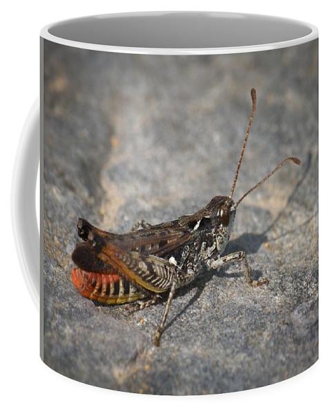 Lehtokukka Coffee Mug featuring the photograph Mottled Grasshopper by Jouko Lehto
