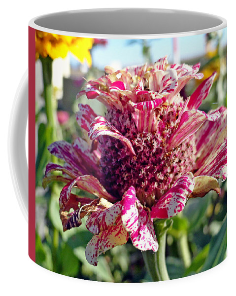 Mottled Pink Coffee Mug featuring the photograph Mottled Pink Cone Flower by Robert Meyers-Lussier