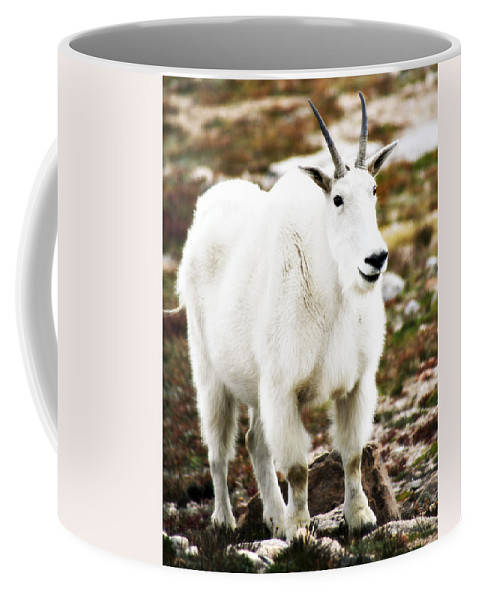 Animal Coffee Mug featuring the photograph Mountain Goat by Marilyn Hunt