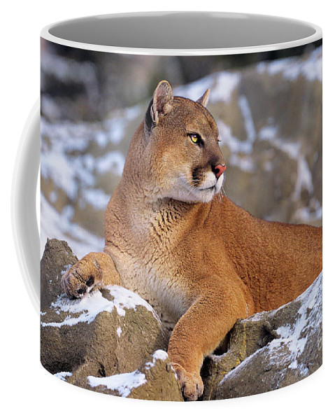 North America Coffee Mug featuring the photograph Mountain Lion On Snow-covered Rock Outcrop by Dave Welling
