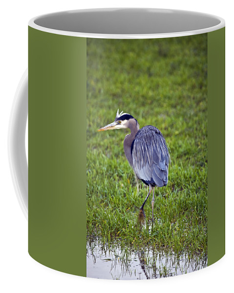 Heron Coffee Mug featuring the photograph Moving by Karen Ulvestad