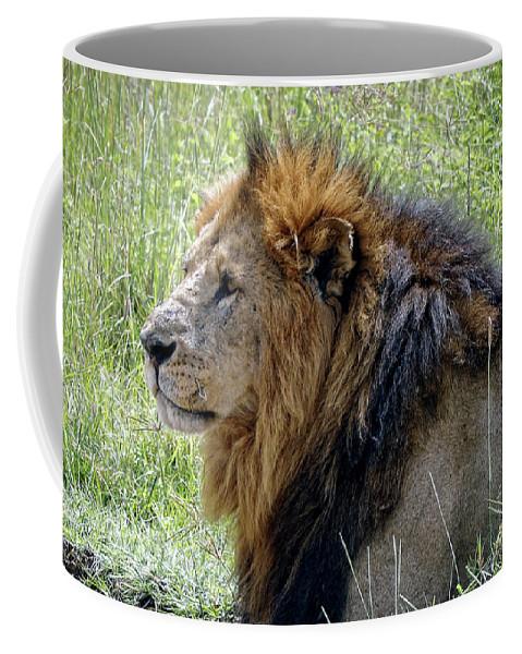 African Lion Coffee Mug featuring the photograph Mr. Big Stuff by Stephen Schwiesow