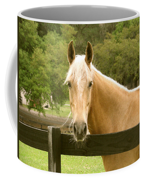 Horse Coffee Mug featuring the photograph Mr. Ed by Adele Moscaritolo