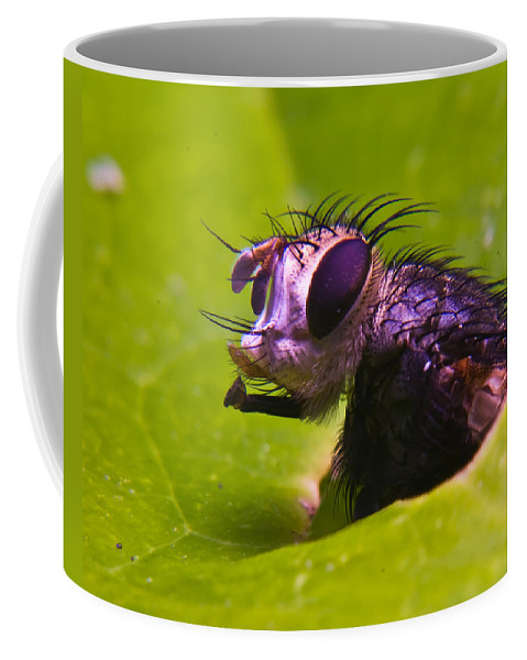 Fly Coffee Mug featuring the photograph Mr. Fly by Douglas Barnett