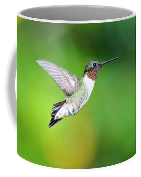 Ruby Throated Hummingbird Coffee Mug featuring the photograph Mr. Humming Bird by John Ruggeri