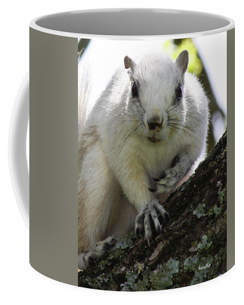 Squirrel Coffee Mug featuring the photograph Mr. Inquisitive I by Betsy Knapp