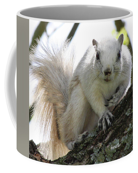 Squirrel Coffee Mug featuring the photograph Mr. Inquisitive II by Betsy Knapp