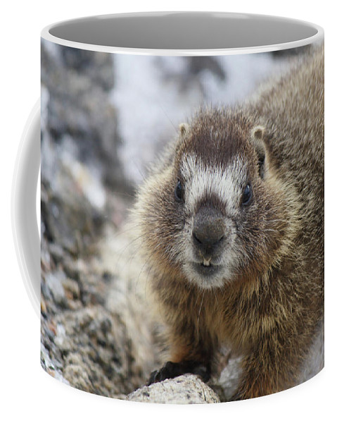 Animal Coffee Mug featuring the photograph Mr. Marmot by Marie Leslie