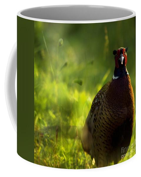Bird Coffee Mug featuring the photograph Mr Pheasant by Angel Ciesniarska
