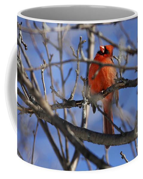 Bird Coffee Mug featuring the photograph Mr. Red Beauty by Deborah Benoit